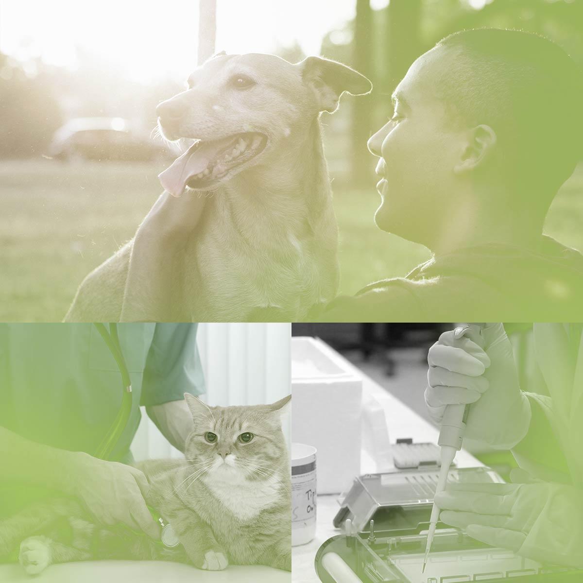cluster-animal-health